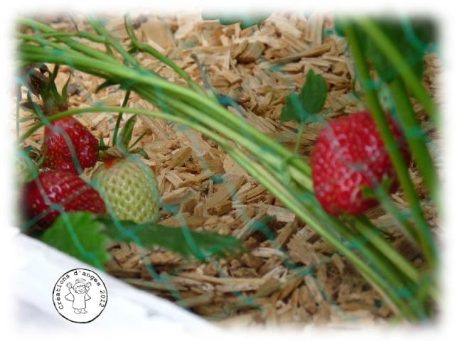 http://i45.servimg.com/u/f45/10/05/42/27/fraise10.jpg