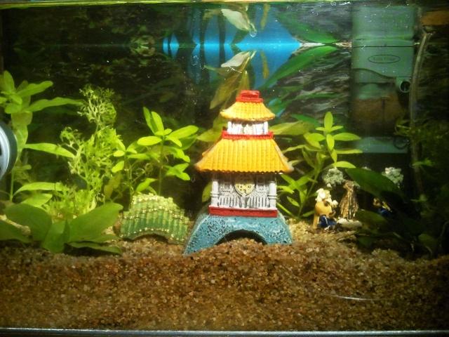 Mon aquarium 20l for Filtre aquarium 20l