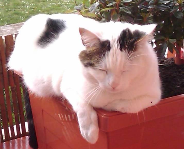 Perdu gizmo chat blanc taches noires castanet tolosan - Tache de javel sur tissu noir ...