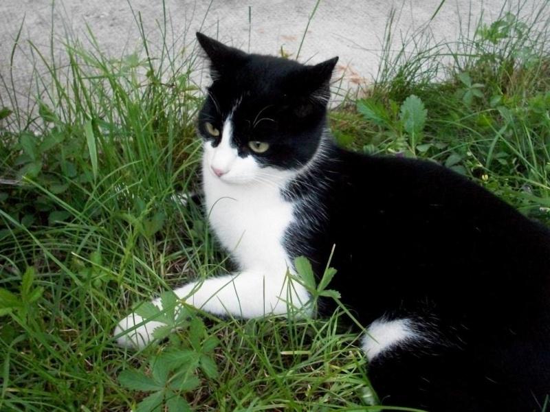 Bekannt Chat noir blanc - Annonces chatons TH41
