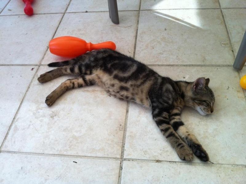 Comment s 39 occuper d 39 un chaton de moins de 2 mois tout savoir sur les animaux - Comment eliminer les puces d un chat ...