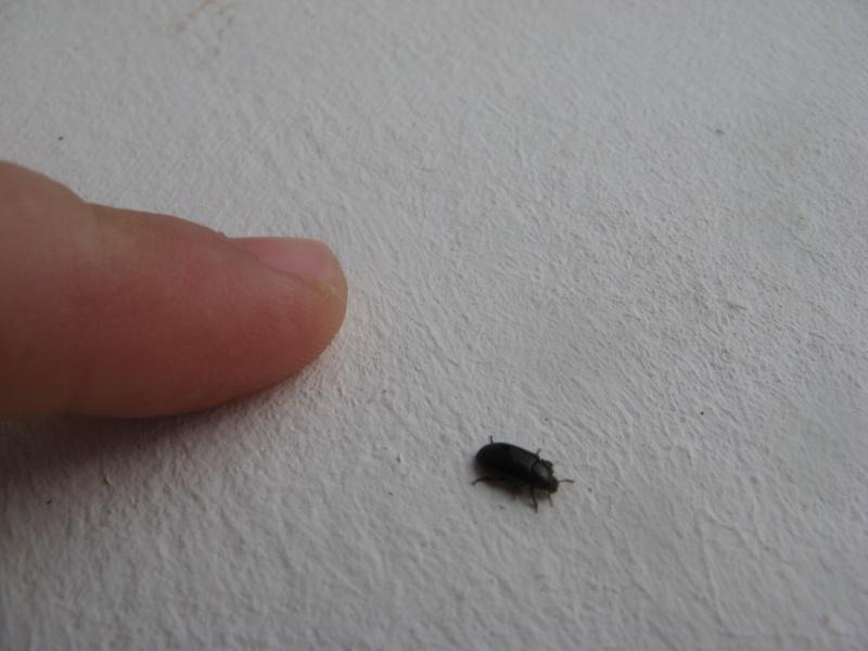 Insectes qui squattent ma maison - Insecte volant dans la maison ...
