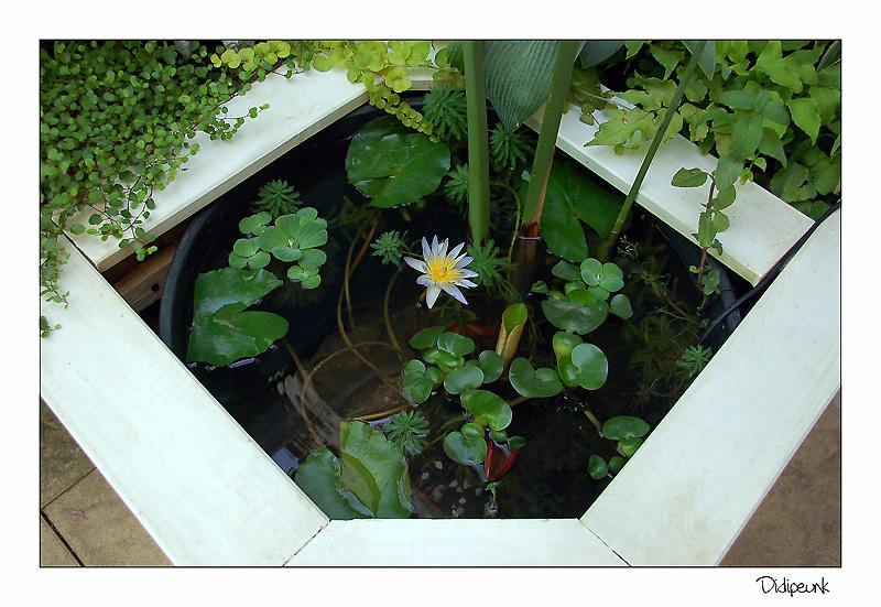 nature bassin la mare et le bassin de jardin naturel afficher le sujet mon mini bassin et. Black Bedroom Furniture Sets. Home Design Ideas