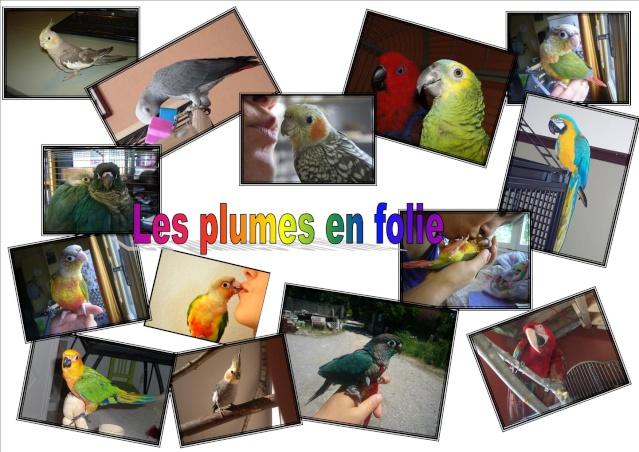 LES PLUMES EN FOLIE forum sur les perroquets et perruches