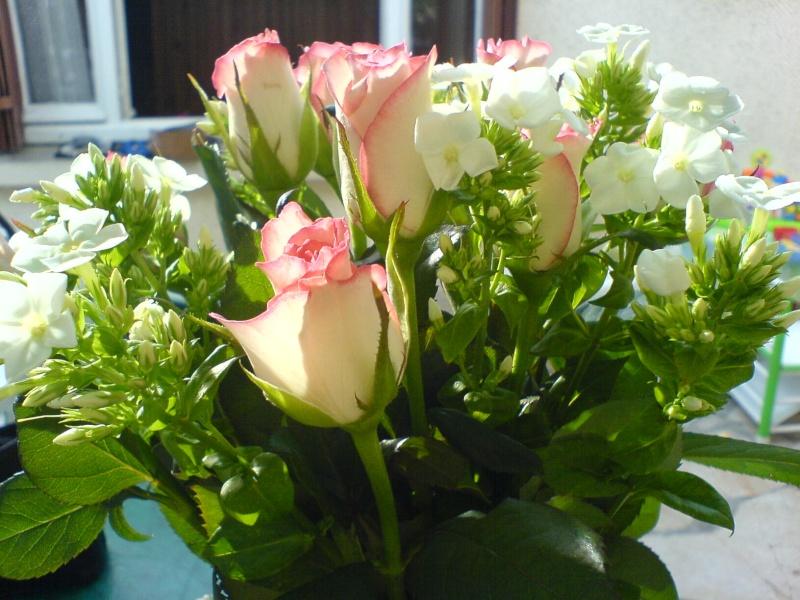 roses19.jpg