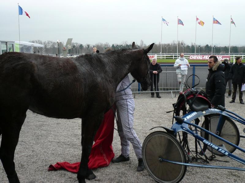 Après la course, les chevaux sont désattelés dans la zone de pesage