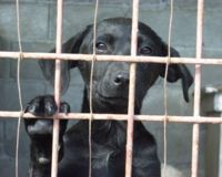 petition anti euthanasie animaux errants Europe