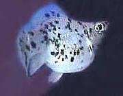 http://i45.servimg.com/u/f45/11/35/07/27/femell11.jpg