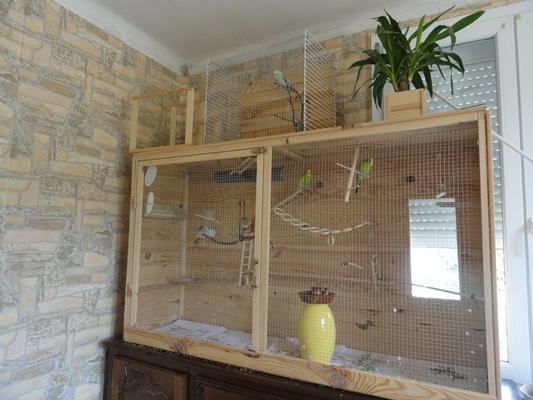 comment construire voliere pour perruches la r ponse est sur. Black Bedroom Furniture Sets. Home Design Ideas