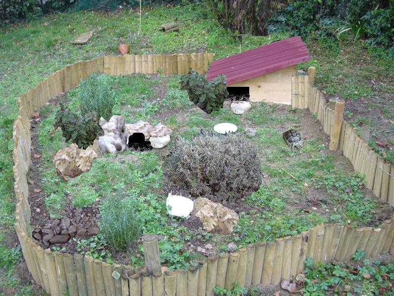 grotte pour tortue terrestre