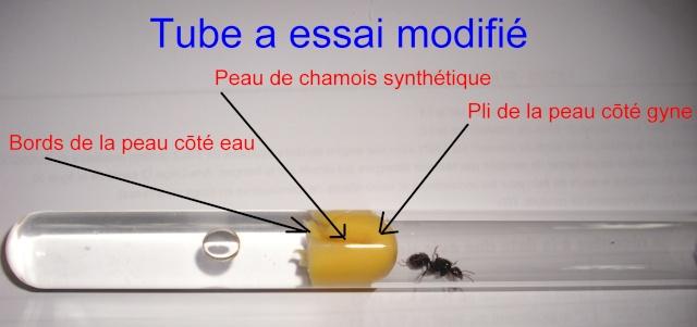 modification des tubes essai radication du coton page 2. Black Bedroom Furniture Sets. Home Design Ideas