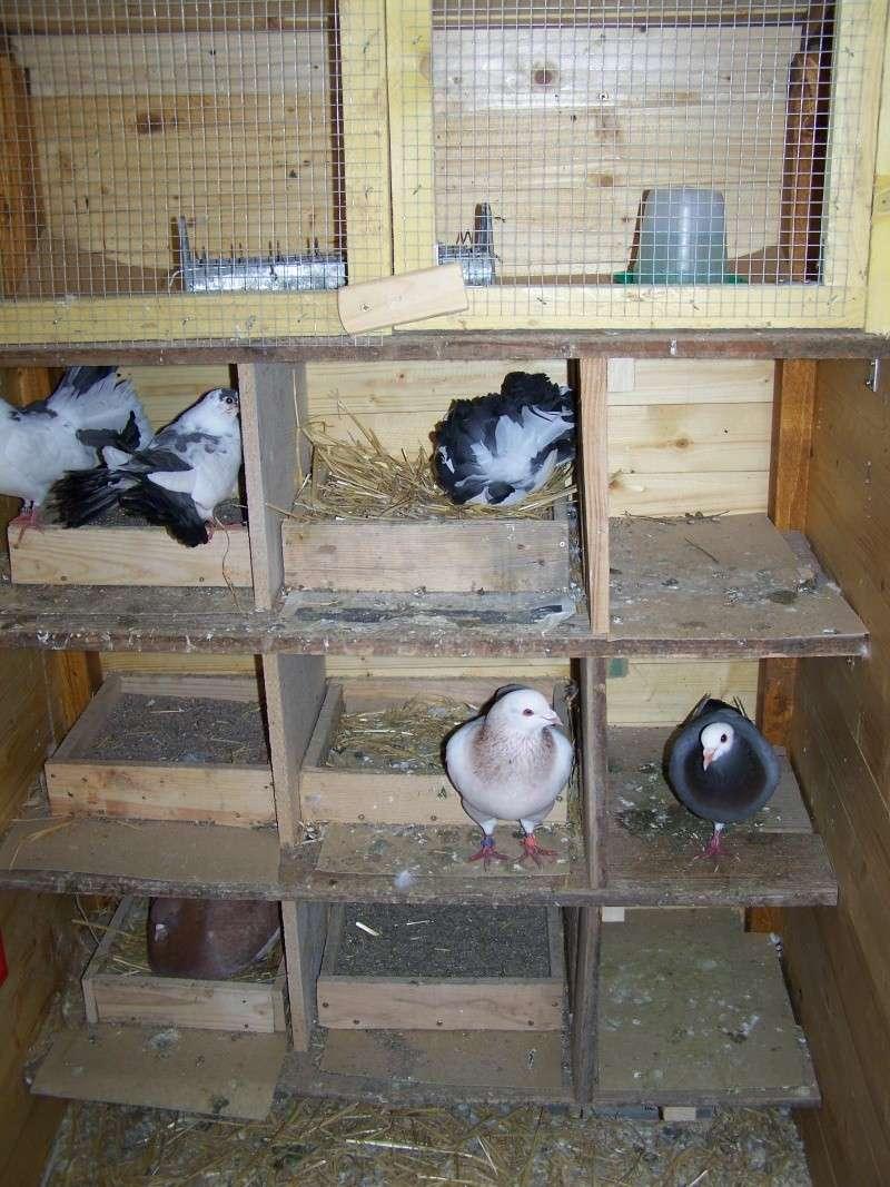 Petite voli re pour pigeons pour le bien tre de nos poulettes - Que faire avec des palettes de recuperation ...