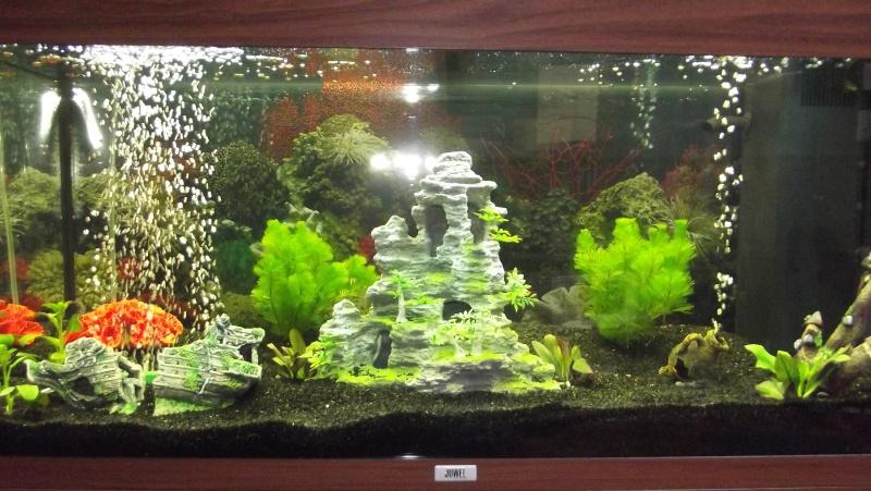 Lancement d 39 un aqua d 39 eau douce for Deco aquarium eau douce