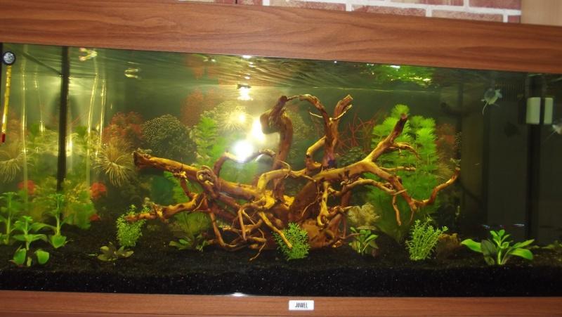 Mon juwel rio 180 for Racine pour aquarium