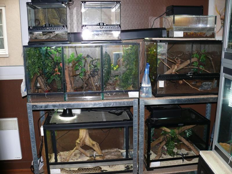 Notre coin reptiles - Tapis chauffant terrarium ...