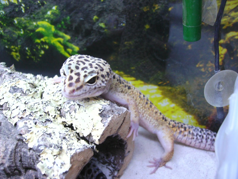 geckol10.jpg