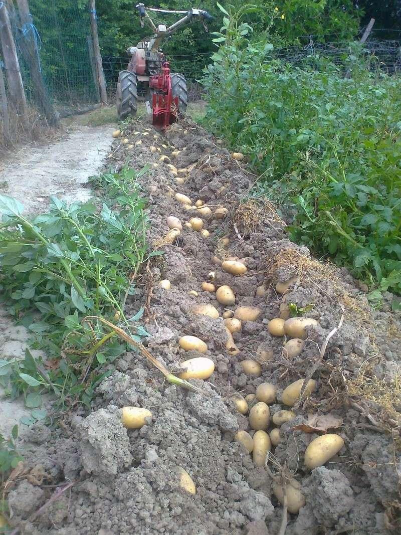 Bientot il faut planter les pommes de terre page 3 - Planter les pommes de terre ...