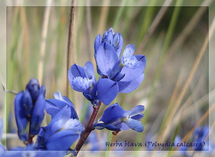 herba_10.jpg