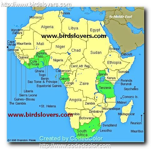 الإذكاء الأفريقي