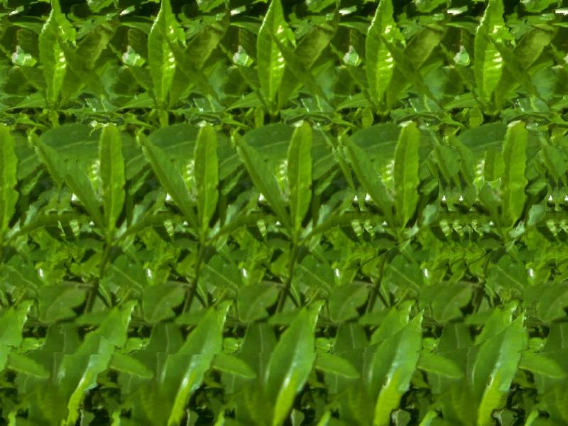 Imagenes 3D para activar tu glandula pineal