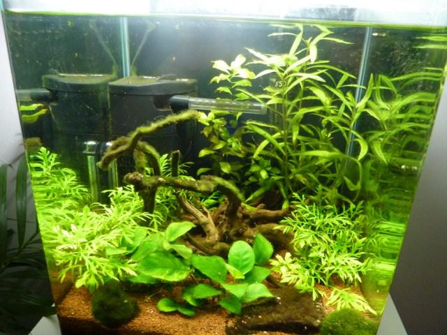 Aide pour peupleur mon nano de 30l for Poisson aquarium 30l
