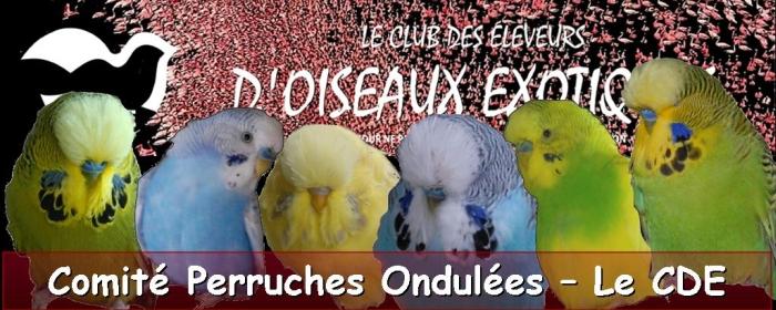 Comité Perruches Ondulées - CDE