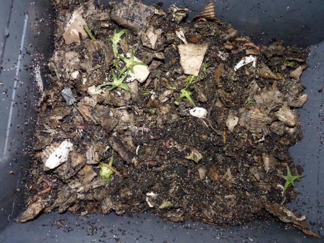 le lombricomposteur le compost d 39 appartement page 4. Black Bedroom Furniture Sets. Home Design Ideas