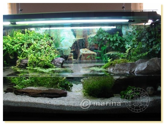 Exemples d 39 aquariums pour tortues aquatiques for Aquarium interieur