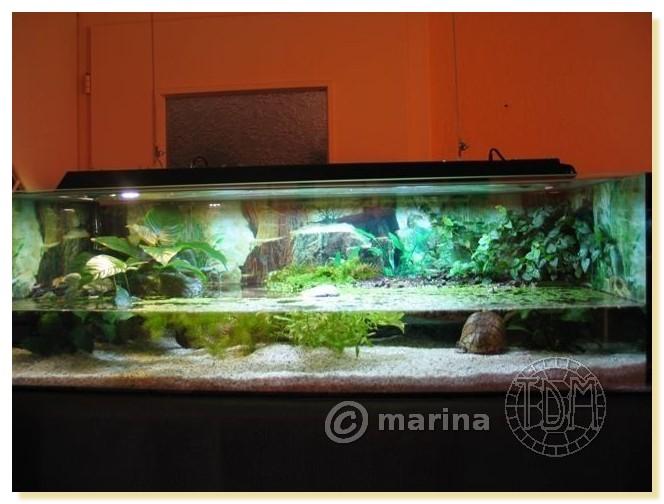 materiel pour tortue aquatique