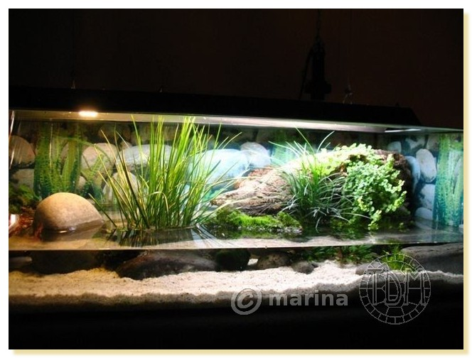id e d coration aquarium tortue. Black Bedroom Furniture Sets. Home Design Ideas