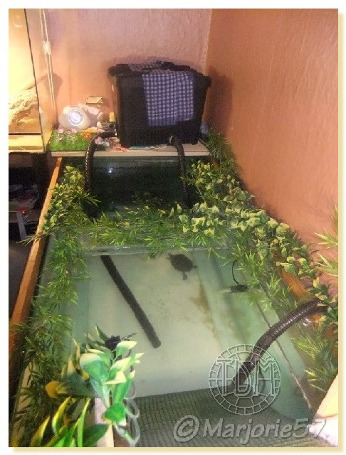 Exemples d 39 aquariums pour tortues aquatiques for Pompe aquarium exterieur