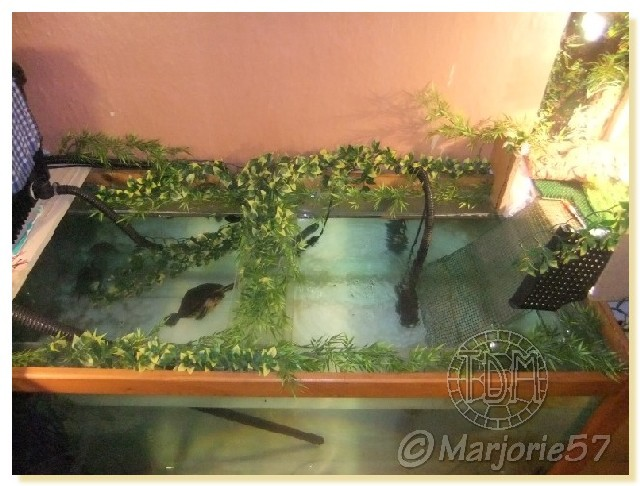 Exemples d 39 aquariums pour tortues aquatiques - Bassin tortue floride strasbourg ...