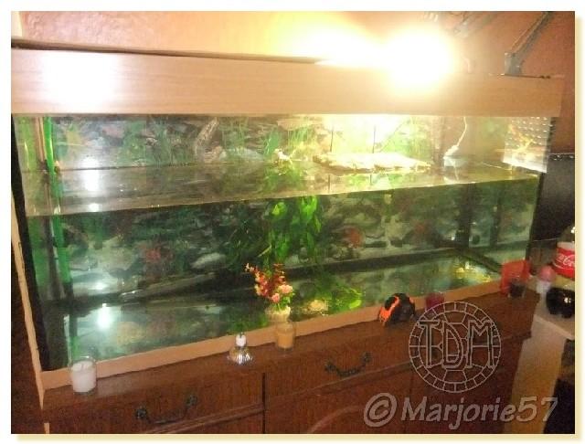 exemples d aquariums pour tortues aquatiques