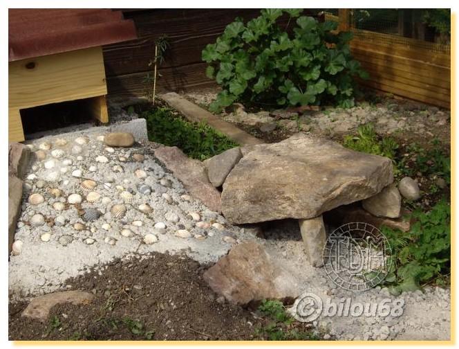 amenagement enclos tortue terrestre
