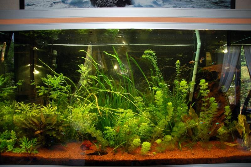 vend aquarium rena 360 litres 14 50 61. Black Bedroom Furniture Sets. Home Design Ideas