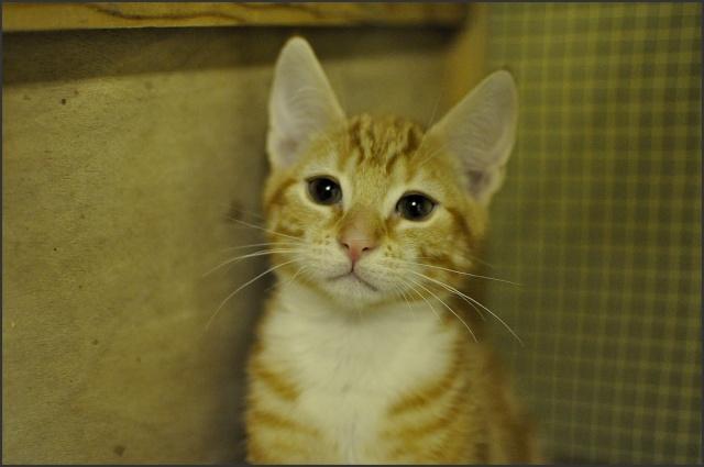 Forum des chats chats adopter chat - Couper les griffes d un chaton de 2 mois ...