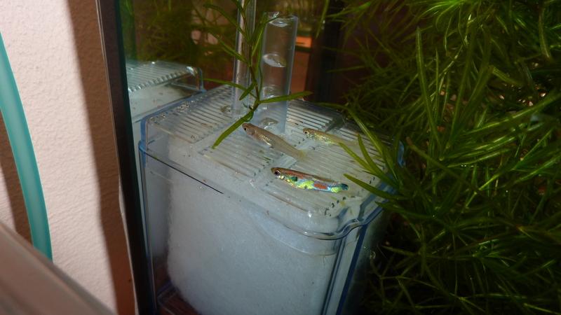 Filtre exhausteur pour aquarium de guppy et crevettes