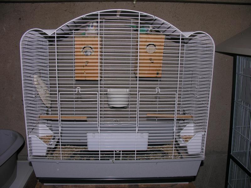 avis pour la reproduction de mes perruches. Black Bedroom Furniture Sets. Home Design Ideas