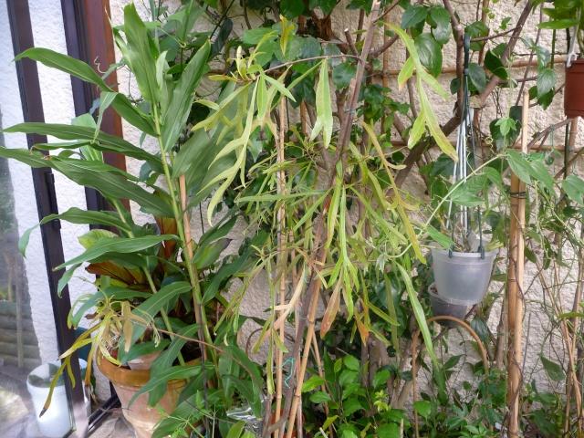 Hivernage des plantes page 5 for Hivernage des plantes