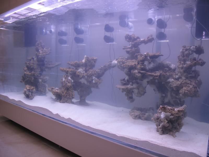 aquarium eau de mer sans pierre vivante. Black Bedroom Furniture Sets. Home Design Ideas