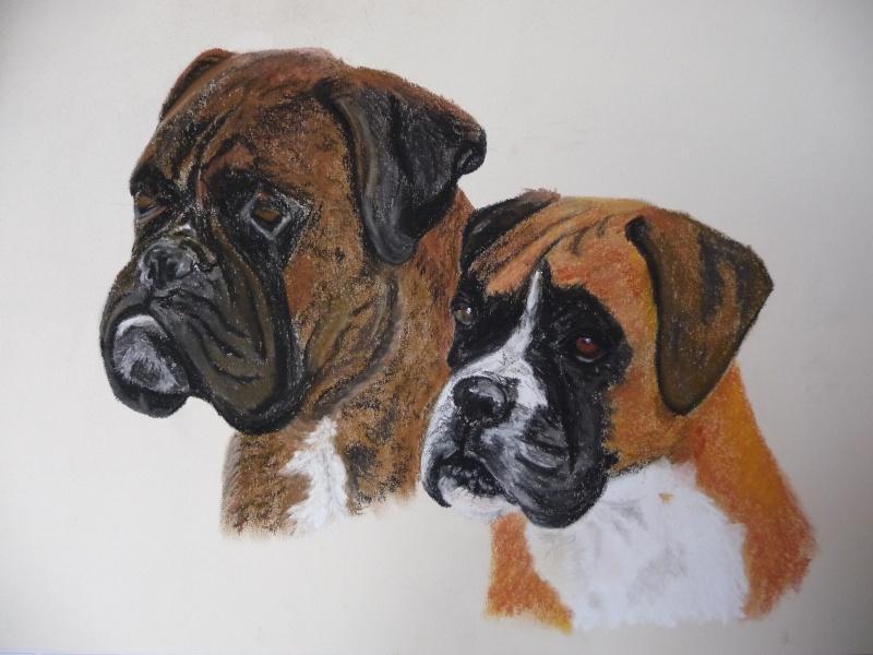 Dessins de chiens page 2 - Coloriage boxer ...