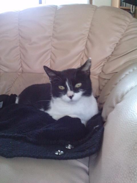 Chatte noire sur la chatte blanche