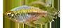 Otras Familias de peces fluviales