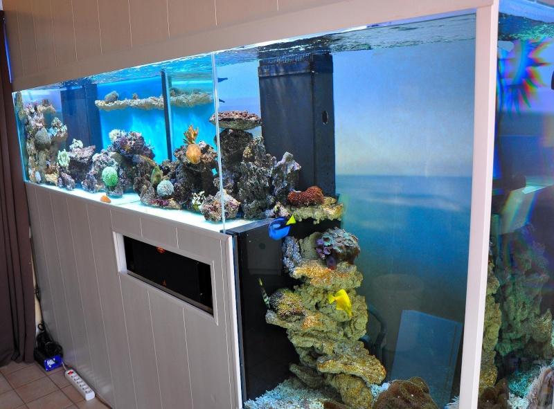 Recifal france 1700l de doudounet pr sentation de vos for Aquarium bac