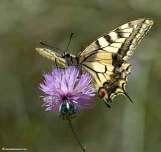 Je deviens papillon. dans POESIES, TEXTES 34258_10
