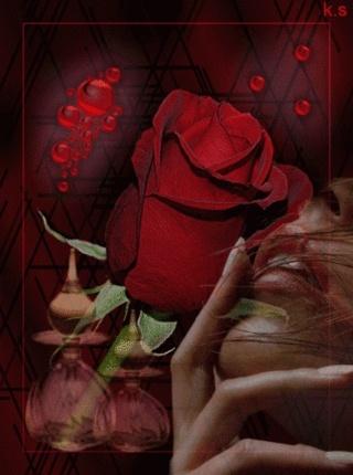 Des roses, rien que pour moi dans MOMENT DE VIE b10be310