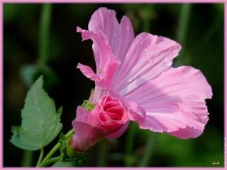 Dans l'eau d'une fleur dans LES 4 SAISONS bouton10