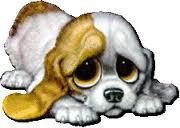 Ne m'abandonne pas. dans MES ANIMAUX DE COMPAGNIE chien_10