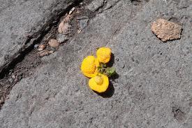 Une fleur de trottoir dans LES 4 SAISONS images52