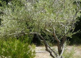Secrets bien gardés. dans POESIES, TEXTES olivie10